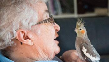 Mascotas más beneficiosas para las personas mayores, grupo retiro