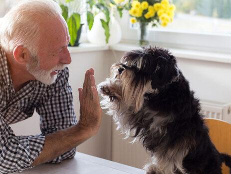 Beneficios, tener perro para las personas mayores, grupo retiro